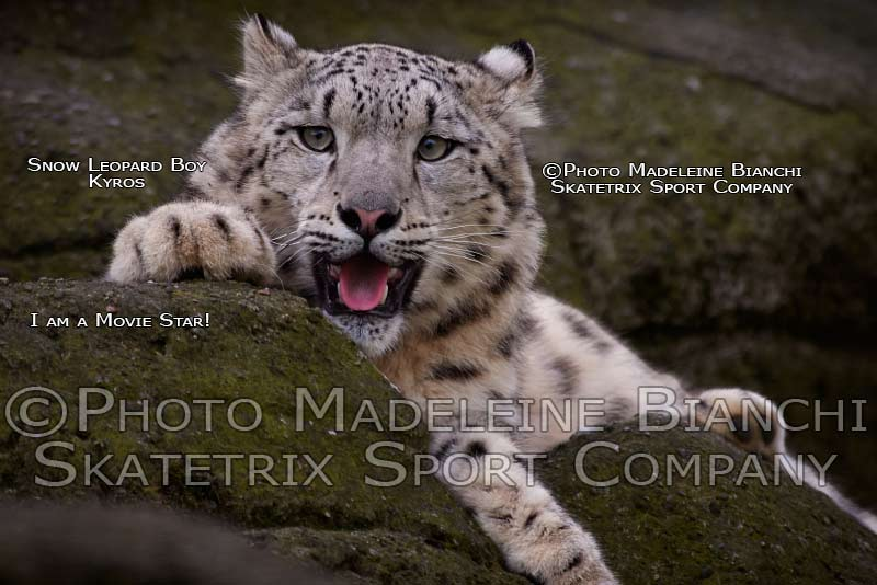 May 01 - 2016 - Snow Leopard KYROS