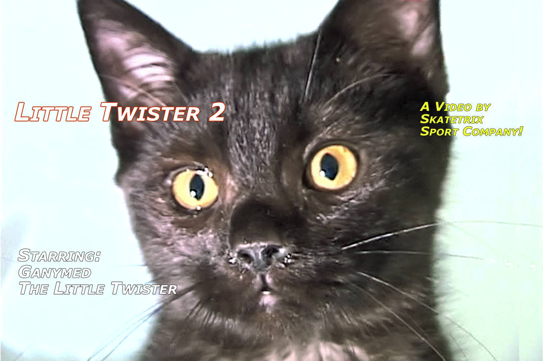 Video: LITTLE TWISTER 2! The 4-month-old little British short hair tomcat. See my Christmas party! Santa Claus is coming to town? Pshaw! I am not afraid of him at all!